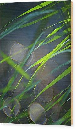 Grass And Evening Light Wood Print by Silke Magino