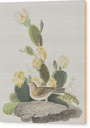 Grass Finch Or Bay Winged Bunting Wood Print by John James Audubon