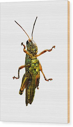 Grasshopper II Wood Print by Gary Adkins