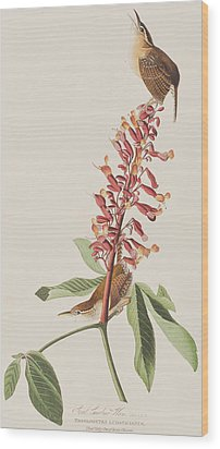 Great Carolina Wren Wood Print by John James Audubon