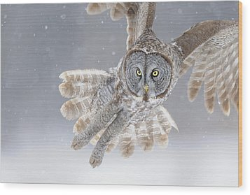 Great Grey Owl In Snowstorm Wood Print by Scott  Linstead