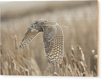 Great Horned Owl Wood Print by Peter Stahl
