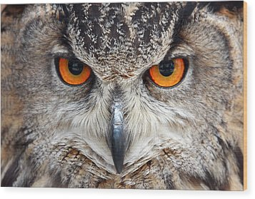Great Horned Owl Wood Print by Pierre Leclerc Photography