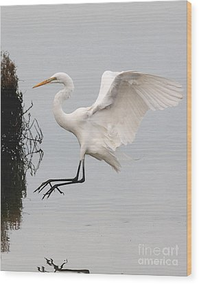 Great White Egret Landing On Water Wood Print by Wingsdomain Art and Photography