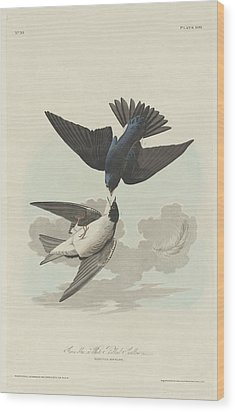 Green-blue Or White-bellied Swallow Wood Print by John James Audubon