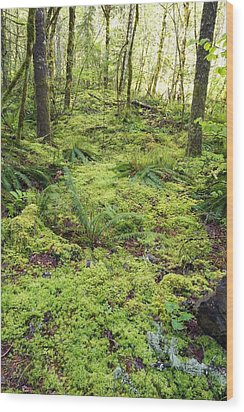 Green Foliage On The Forest Floor Wood Print by Craig Tuttle