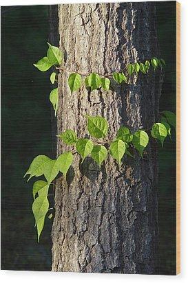 Green Leaves At Walden Pond Wood Print by Christina Solstad