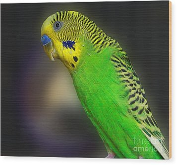 Green Parakeet Portrait Wood Print by Jai Johnson