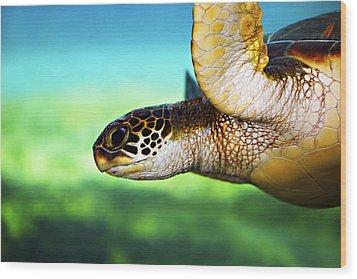 Green Sea Turtle Wood Print by Marilyn Hunt
