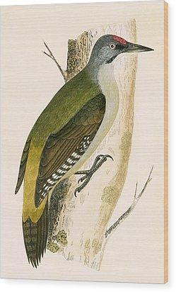 Grey Woodpecker Wood Print by English School