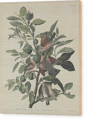 Ground Dove Wood Print by John James Audubon
