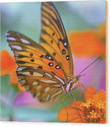 Gulf Fliterary Butterfly Wood Print by Joel Olives Photography