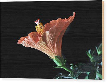 Hibiscus Vein Wood Print by Terence Davis