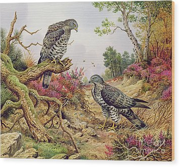 Honey Buzzards Wood Print by Carl Donner