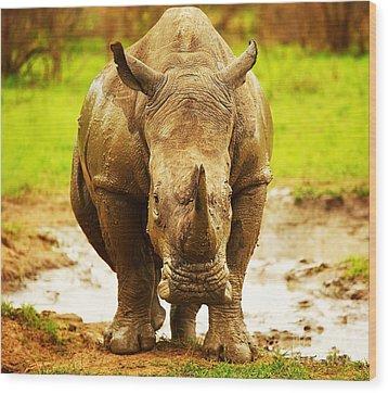 Huge South African Rhino Wood Print by Anna Om