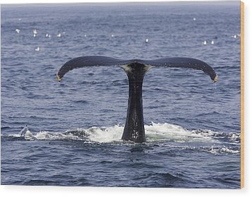 Humpback Whale Swimming Wood Print by Tim Laman