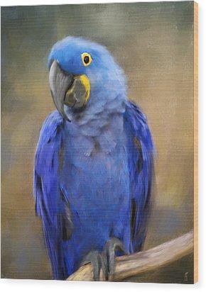 Hyacinth Macaw  Wood Print by Jai Johnson