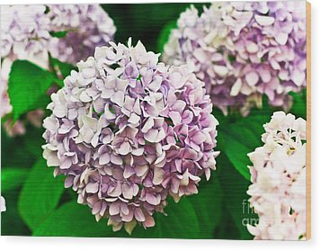 Hydrangea Purple Wood Print by Ryan Kelly