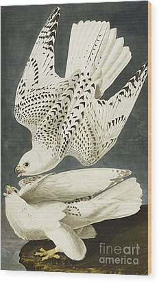 Iceland Or Jer Falcon Wood Print by John James Audubon