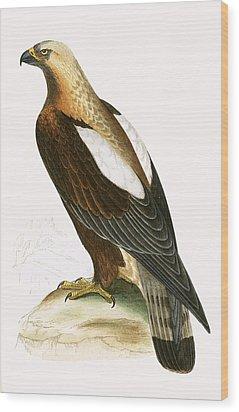 Imperial Eagle Wood Print by English School