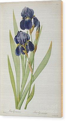 Iris Germanica Wood Print by Pierre Joseph Redoute