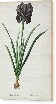 Iris Luxiana Wood Print by Pierre Joseph  Redoute