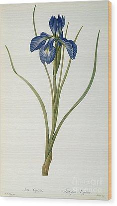 Iris Xyphioides Wood Print by Pierre Joseph Redoute