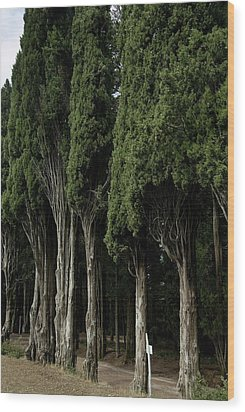Italian Cypress Trees Line A Road Wood Print by Todd Gipstein