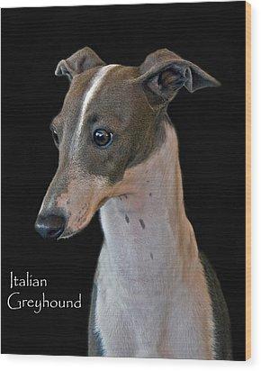 Italian Greyhound Wood Print by Larry Linton