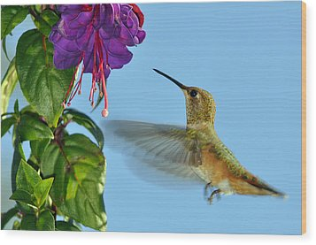 Jeweled Rufous In Afternoon Light Wood Print by Laura Mountainspring