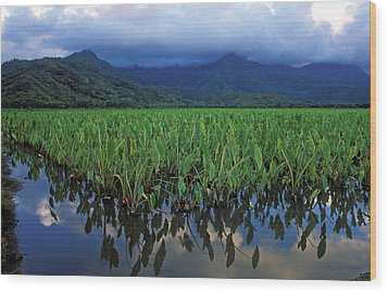Kauai Taro Field Wood Print by Kathy Yates