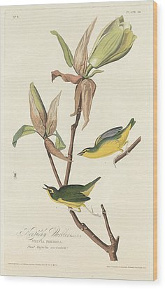 Kentucky Warbler Wood Print by John James Audubon