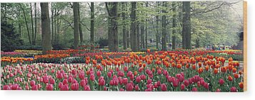 Keukenhof Garden, Lisse, The Netherlands Wood Print by Panoramic Images