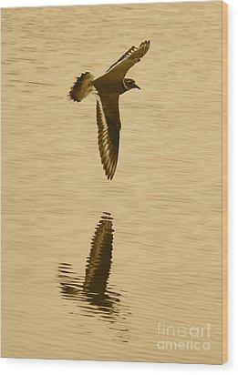 Killdeer Over The Pond Wood Print by Carol Groenen