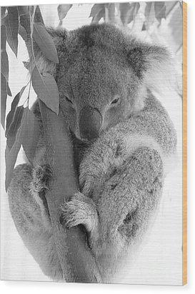 Koala Bear Wood Print by Terry Burgess