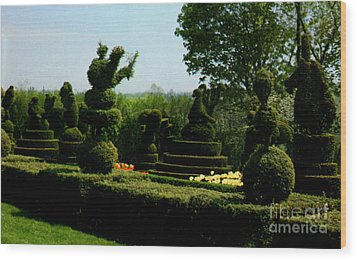 Ladew Topiary Gardens Wood Print by Ruth  Housley