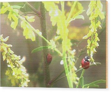 Ladybug Ladybug Wood Print by Toni Hopper