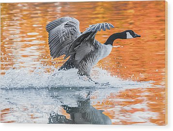 Landing Wood Print by Parker Cunningham