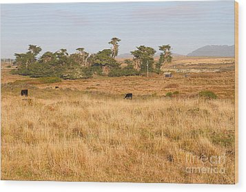 Landscape With Cows Grazing In The Field . 7d9957 Wood Print by Wingsdomain Art and Photography
