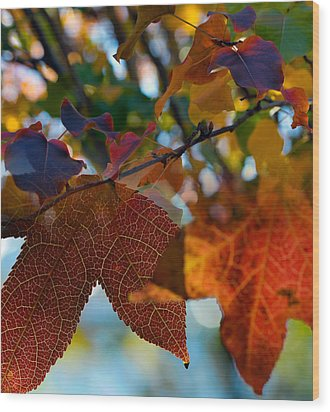 Late Autumn Colors Wood Print by Stephen Anderson