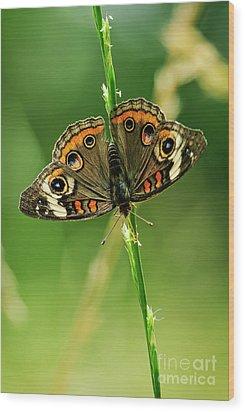 Lepidoptera Wood Print by Charles Dobbs