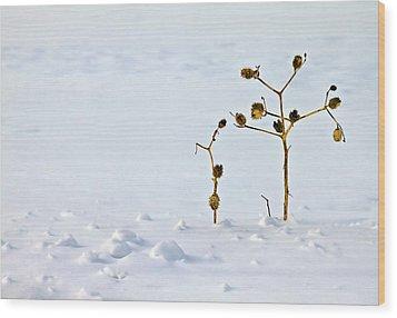 Let's Stick Together Wood Print by Evelina Kremsdorf