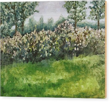 Lilac Bushes In Springtime Wood Print by Michelle Calkins