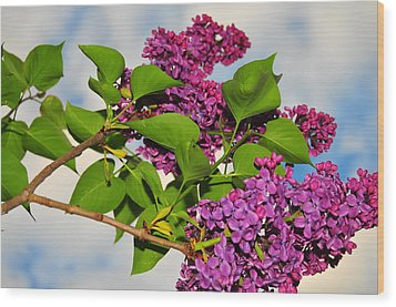 Lilacs Wood Print by Catherine Reusch  Daley
