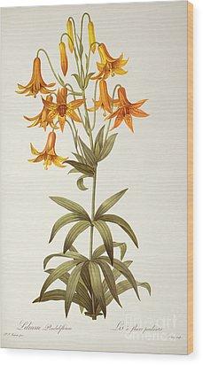 Lilium Penduliflorum Wood Print by Pierre Joseph Redoute