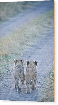 Lion Cubs Walking Together In Masai Mara Wood Print by Mehmed Zelkovic