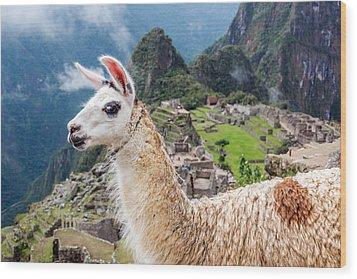 Llama At Machu Picchu Wood Print by Jess Kraft