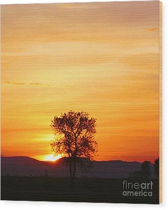 Lone Tree Sunset Wood Print by Nick Gustafson