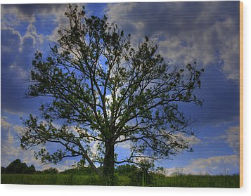 Lonely Tree Wood Print by Kevin Hill