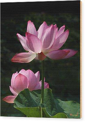 Lotus Beauties--upstaged Dl048 Wood Print by Gerry Gantt